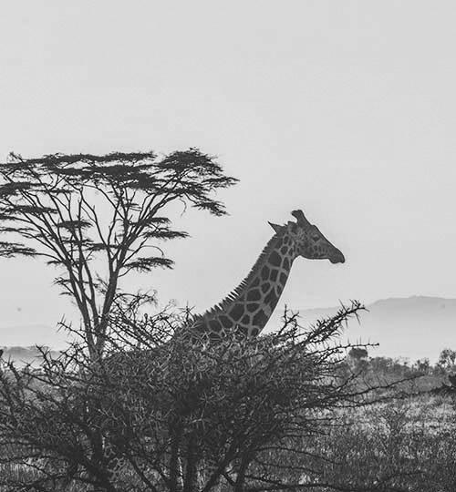 Africa-byn